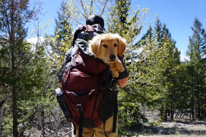 Man Carrying Dog on Red Backpack